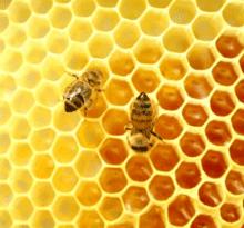 abejas en panal