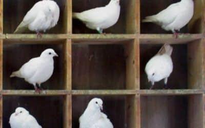 El principio del palomar: 10 Curiosidades divertidas de la vida real