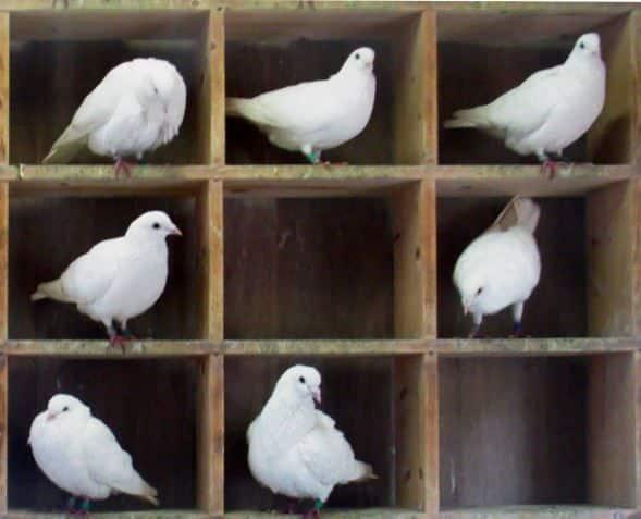 principio del palomar