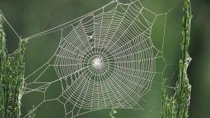 tela de araña, pura matemática